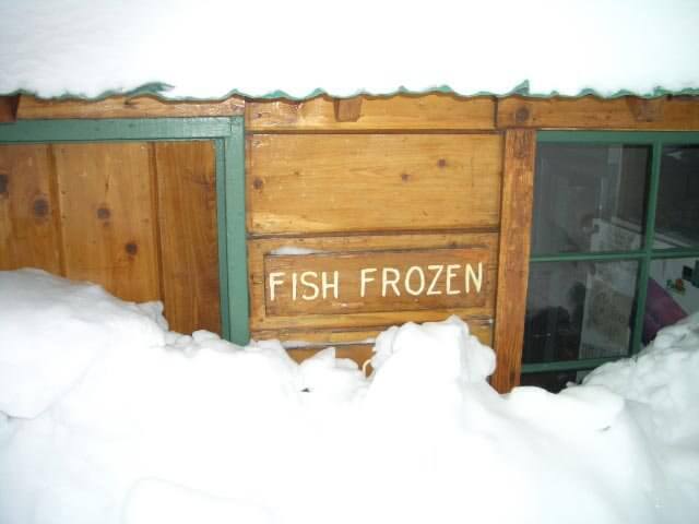 fish frozen (covered in snow)